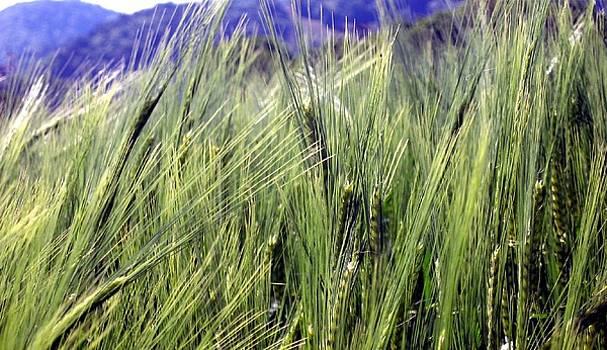 Grain by Kneki Krtukaj