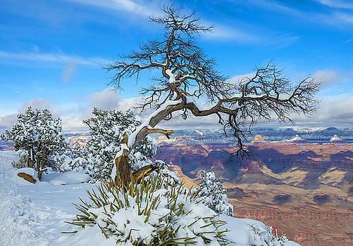 Grand Canyon by Kobby Dagan