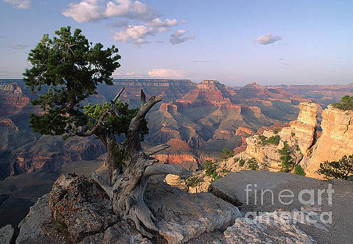 Grand Canyon, late afternoon by Kevin Shields