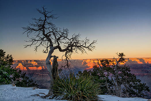 Grand Canyon Lone Tree at Sunset by Gej Jones