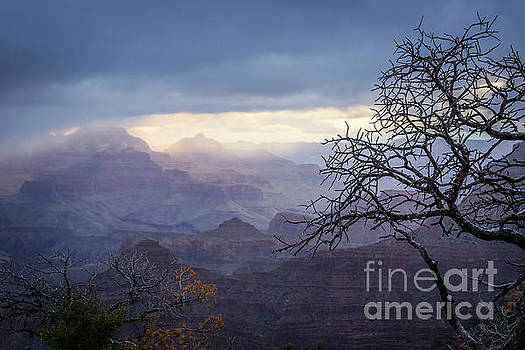 Grand Canyon Morning by Joan McCool