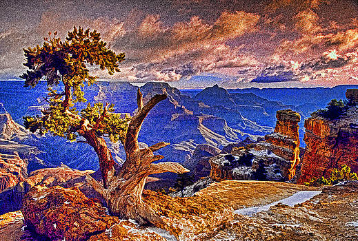 Dennis Cox WorldViews - Grand Canyon Pine