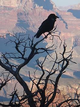Grand Canyon Raven by Matt Lennon