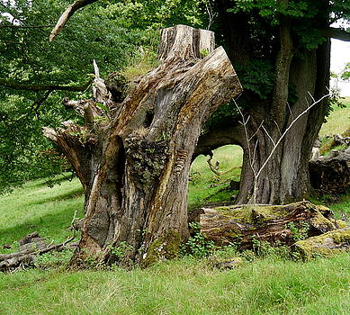 Grand old Tree by Fred Whalley