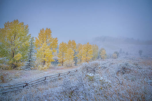 Grand Teton Fall Snowfall Scene by Scott McGuire