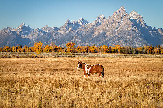 Grand Teton National Park - Paint Brush by Jason Penland