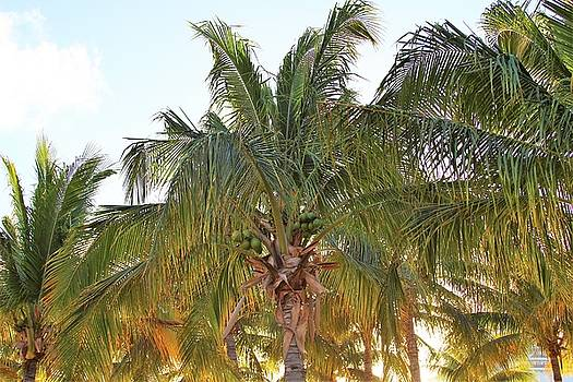 Grand Turk Palms on the Beach by Robert Smith