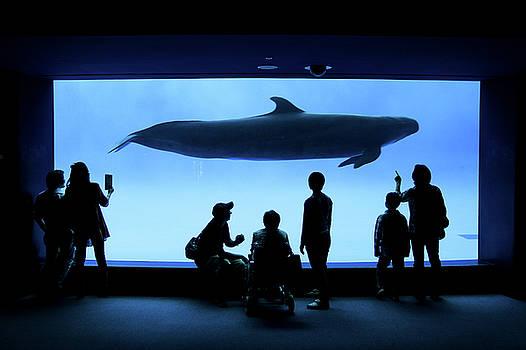 Grand whale by Tatsuya Atarashi