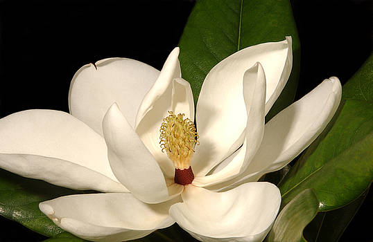 Grandiflora by Greg and Chrystal Mimbs