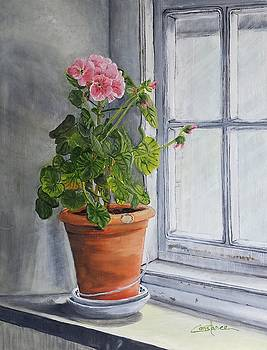 Granny's Window Sill by Connie Rowsell