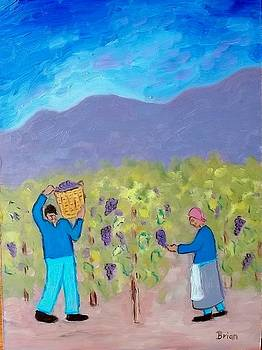 Grape Harvest by Brian Van der Spuy