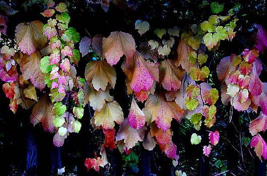 Grape Leaves In FAll by David Gardner