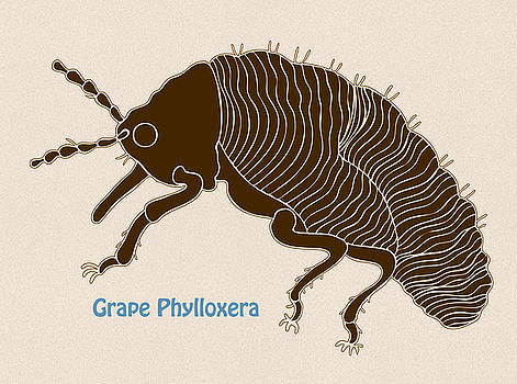Grape Phylloxera by Frank Tschakert