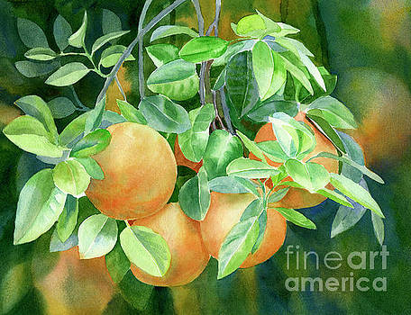 Grapefruit with Background by Sharon Freeman