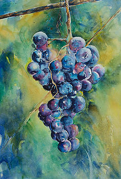 Grapes in the Vineyard by Adam VanHouten