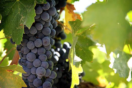 Grapes by Nancy Ingersoll