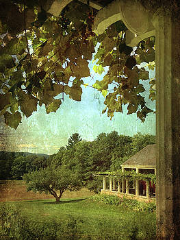 Grapes On Arbor  by Betty Pauwels