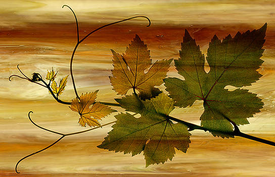 Marsha Tudor - Grapes on Gold
