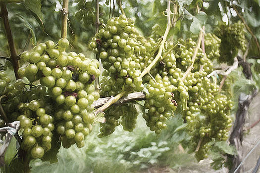 Grapes by Zev Steinhardt