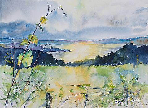 Grapevines over the Bay by Adam VanHouten