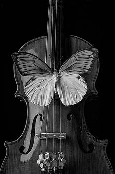 Graphic Butterfly On Violin by Garry Gay