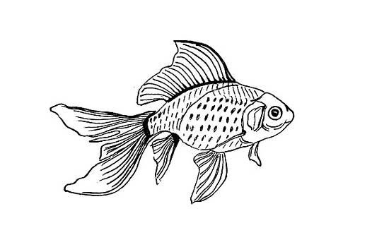 Graphic Fish by Masha Batkova