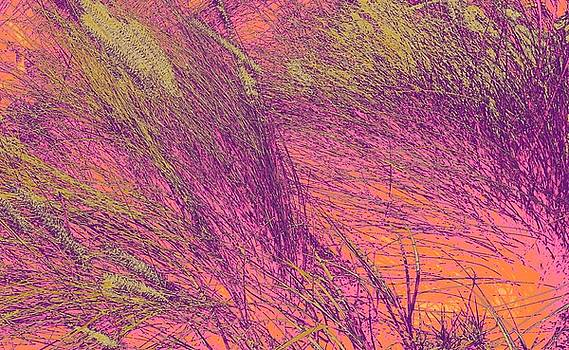 Grass Abstract 3 by Donna Spadola