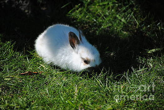 TChamberlin Photography - Grass and a Bunny