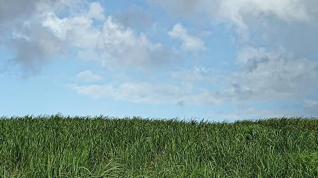 Chris Honeyman - Grass and sky, Barbados 2009