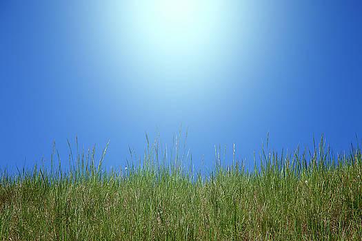 Grass And Sky by Matjaz Preseren