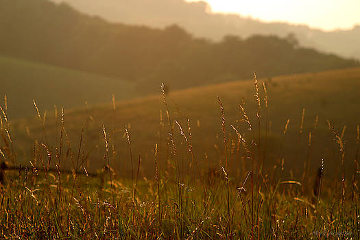 Grass and Sunshine by Mark Wagoner