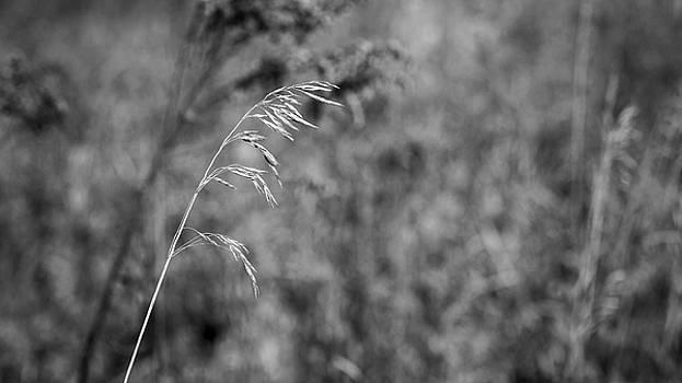 Steven Ralser - Grass Blade