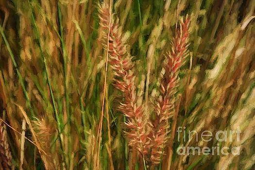 Grass by Byron Fair