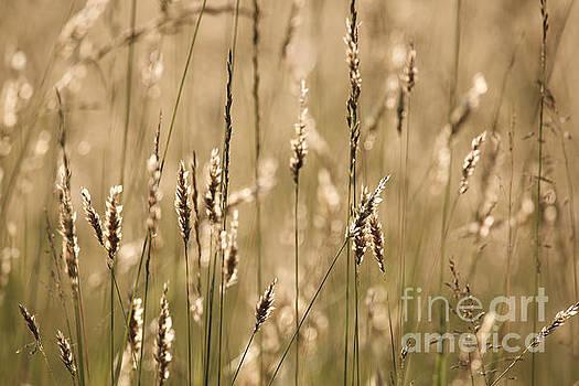 Grass Field by Rachel Morrison