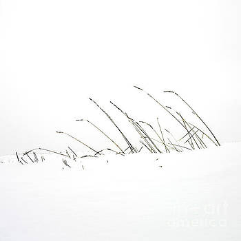 BERNARD JAUBERT - Grass in a snow field