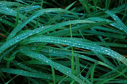 Grass by Kim Blumenstein