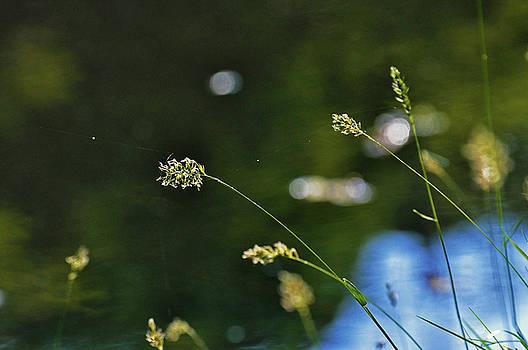 Kay Lovingood - Grass Pods