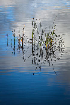Rick Strobaugh - Grass Reflections in the Lake