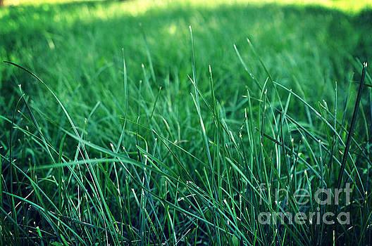 Grass by Remioni Art