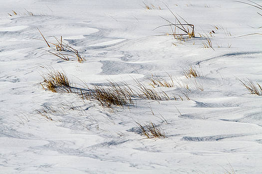 Grass Shoots in Snow by Steven David Roberts