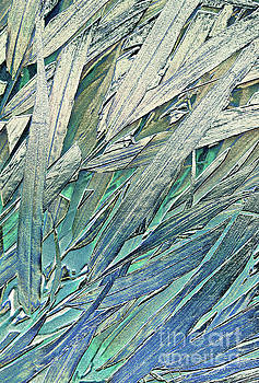 Grass Study by Margaret Koc