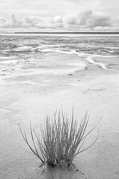 Tim Newton - Grass Tuft in Glacial Silt