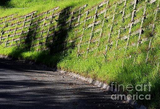 Grass Wall by Katherine Erickson