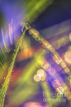 Grass with dew drops by Veikko Suikkanen