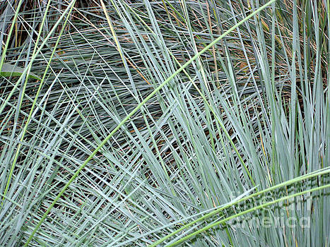Grasses 1 by Adrian March
