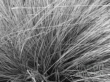 Grasses 13 by Adrian March