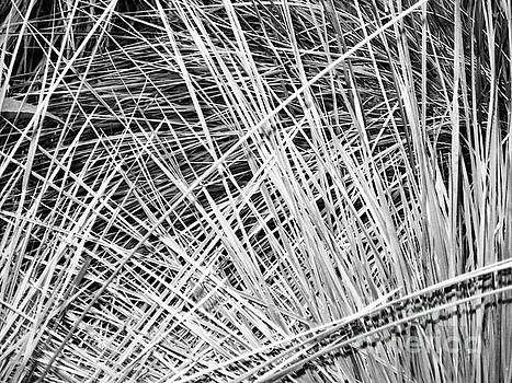 Grasses 16 by Adrian March