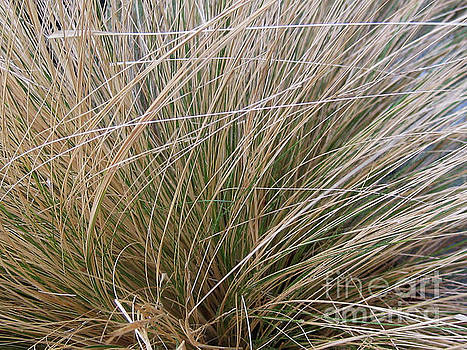 Grasses 5 by Adrian March
