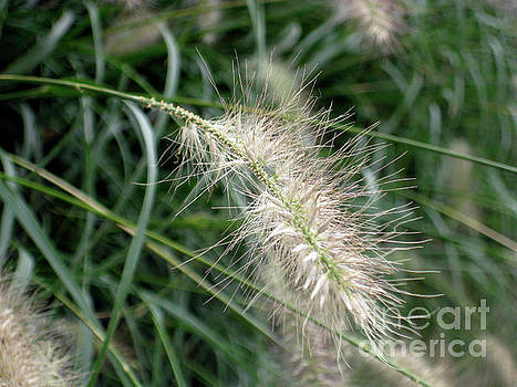 Grasses 6 by Adrian March