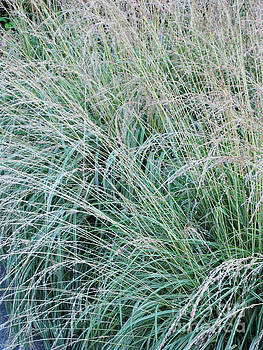 Grasses 8 by Adrian March